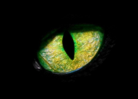 avatar de EvillivE