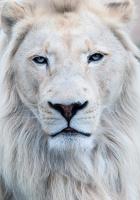 avatar de chaboune