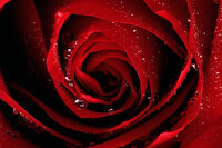 avatar de Rouge_ecarlate