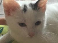 avatar de Osso-le-chat