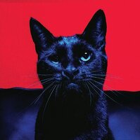 avatar de Finnick