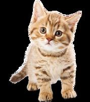 avatar de Merytamon