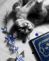 avatar de melanie_wolf_book