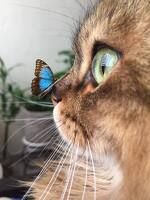 avatar de Laetitia-345