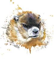 avatar de LaPetiteMarmotte