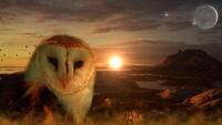 avatar de moonbird