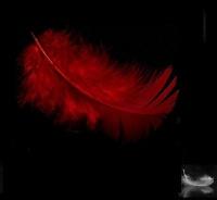 avatar de LiliBook