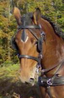 avatar de Papachoultse