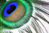 avatar de mimichou-95