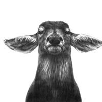 avatar de Chrysmil