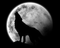 avatar de NanaandRox