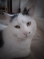 avatar de Zelina