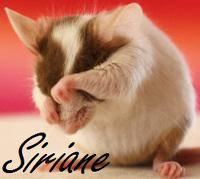 avatar de siriane