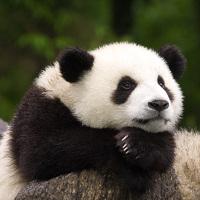 avatar de BigPanda