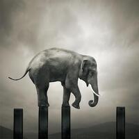 avatar de Celma95