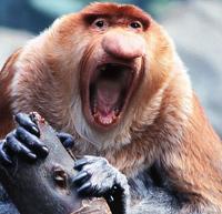 avatar de Krouby