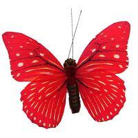 avatar de butterflyred