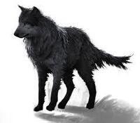 avatar de blackshe-wolf