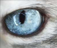 avatar de luna09