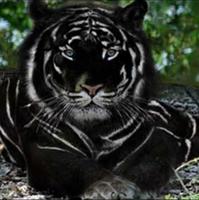 avatar de ladyarfeiniel