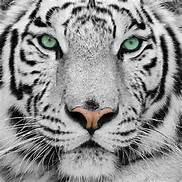 avatar de JeanneP