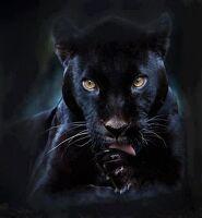 avatar de dede1309
