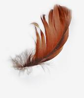 avatar de Melaina