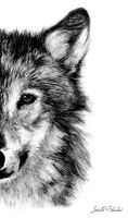 avatar de Fanta06