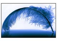 avatar de Plume2Loutre