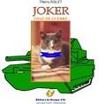 Joker chat de guerre